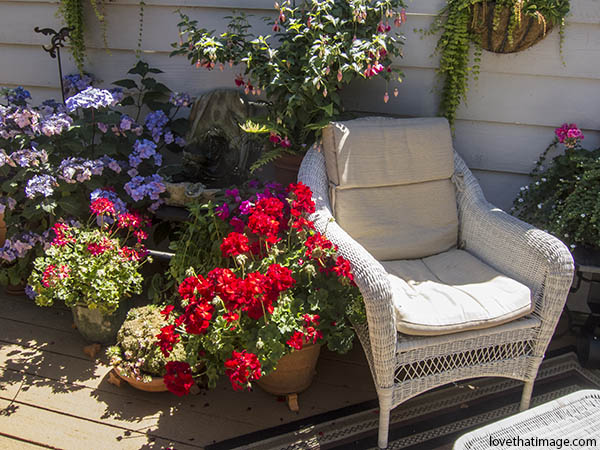 White wicker chair invites on a deck with geraniums, fuchsia and hydrangea
