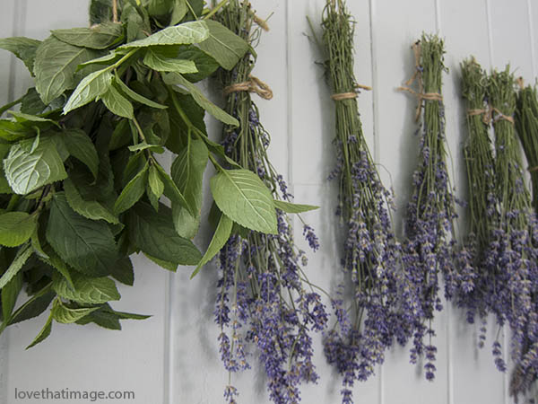 Peppermint leaves and lavender drying in a breezy, shaded area