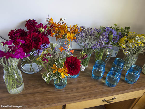 Garden flowers getting ready for wedding centerpieces using blue mason jars