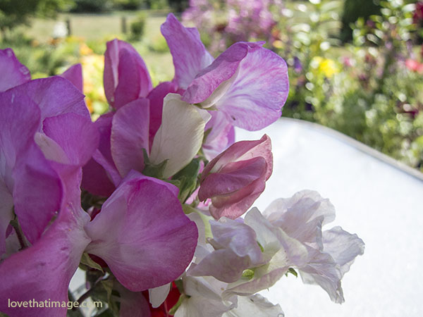Sweetpea bouquet graces an outdoor table