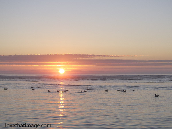 Ducks in the sunset in the Pacific Ocean at Cannon Beach, Oregon