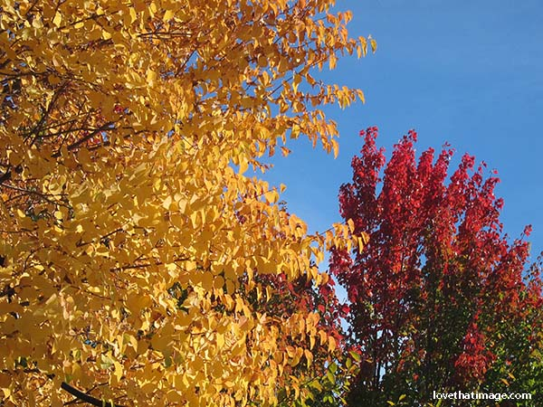 Red, yellow, green and blue in this image of early autumn in Renton, WA
