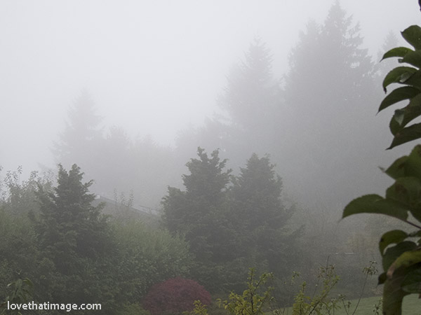 Seattle's foggy weather from a temperature inversion