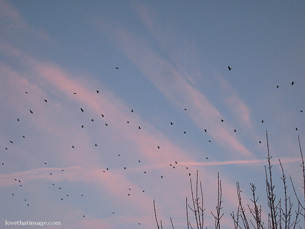 Birds flying against a sunset sky in late fall