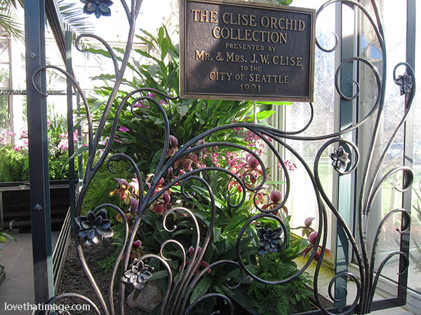 Graceful metalwork at the Clise Orchid Collection in the Conservatory
