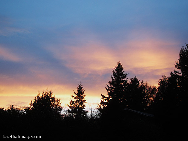 Winter sunset above the trees in the Pacific Northwest