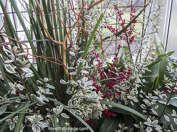 Red berries and variegated leaves in an airy winter floral arrangement