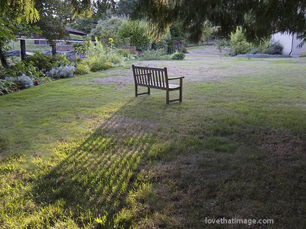 Late afternoon sunshine on a backyard bench