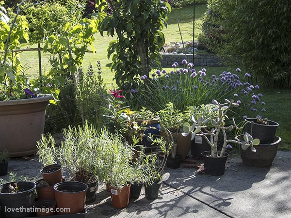 Spring sunshine on some potted plants on the patio