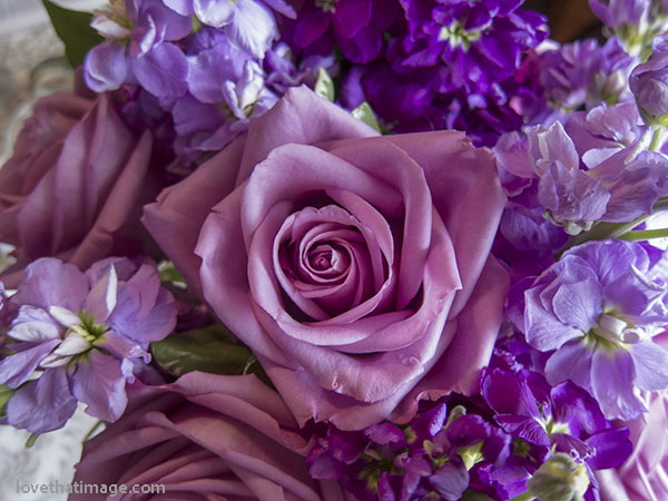 Purple and lavender stock, and heavenly lavender roses, in a perfect florist bouquet