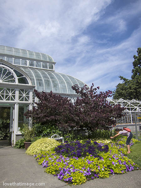 Restoration of the Volunteer Park Conservatory is progressing nicely