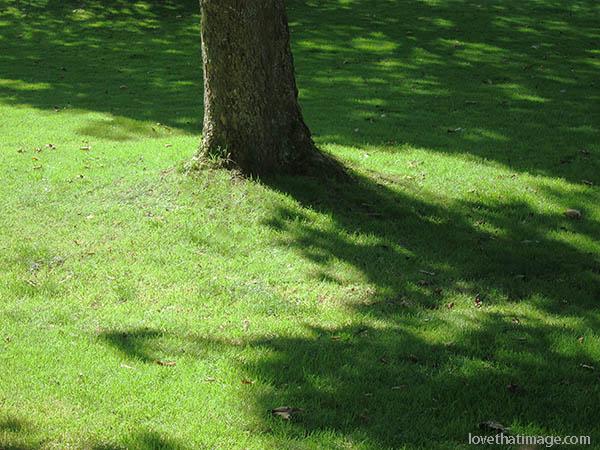 Summer sunshine creates shadows on the lawn at a park