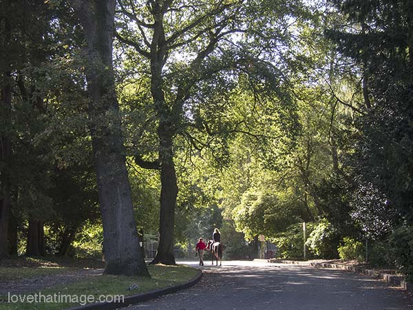 A horse and rider walk through the park on a sunny afternoon
