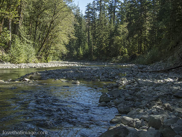 Clear water meanders down the North Fork of the Skokomish River in the Olympic Peninsula,