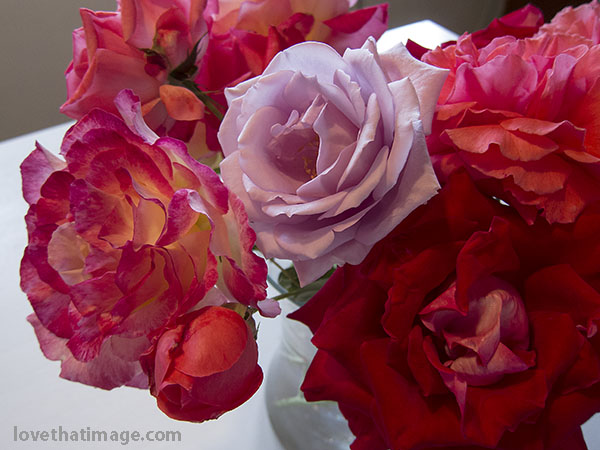 Roses in lavender and shades of red in a late summer bouquet
