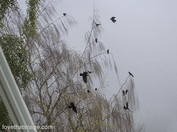 Black crows perch on bare branches against a gray sky, before the rain