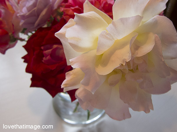 Peace and other roses in a bouquet