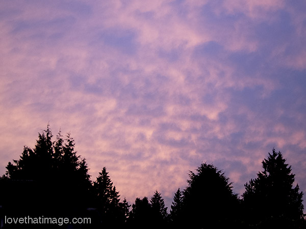 Pink and purple sky with trees in silhouette