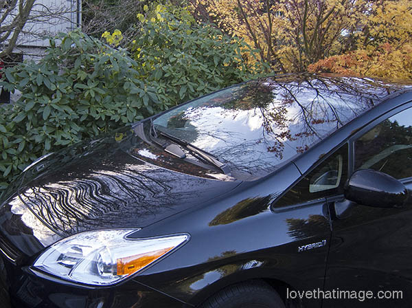 Trees and sky reflected on black car in fall scene