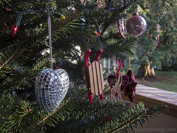 Ornaments hang from an indoor Xmas tree while cedar basks in sun outside