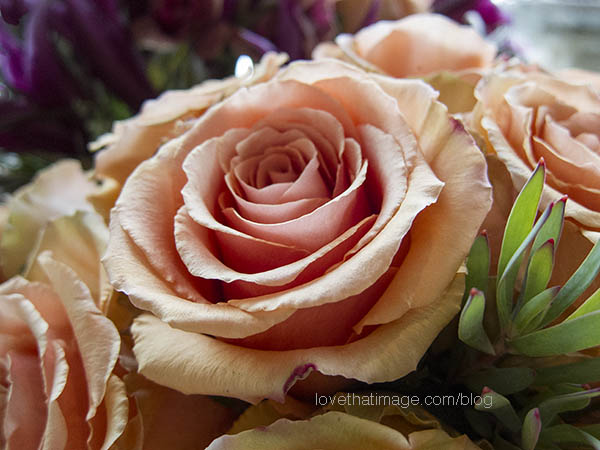 Macro of apricot roses in a bouquet