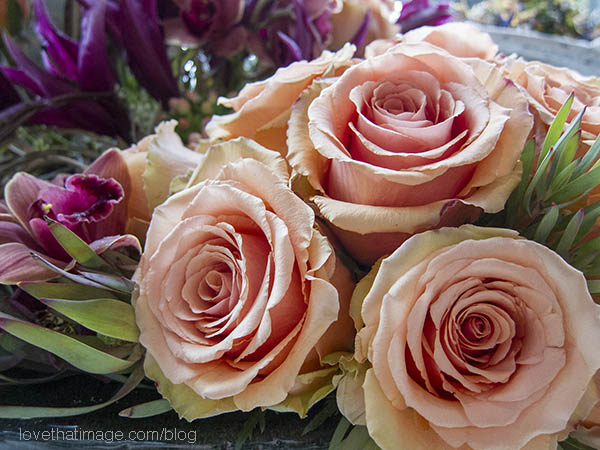 Apricot roses in a bouquet