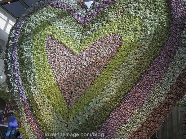 Gigantic heart with thousands of sedum plants at the NWFGS last week