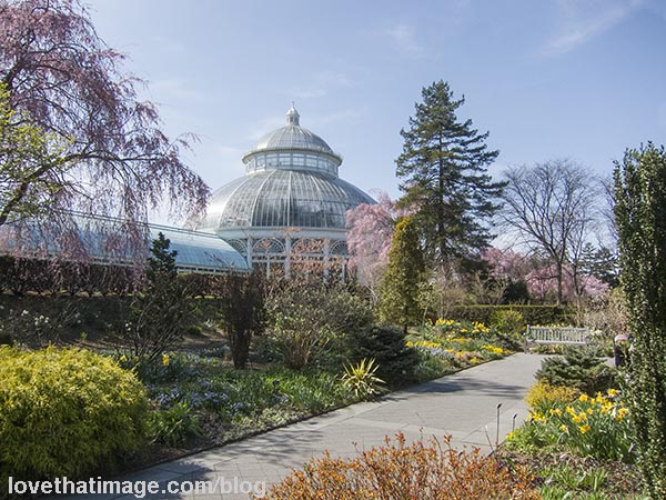 Springtime in New York at the Haupt Conservatory