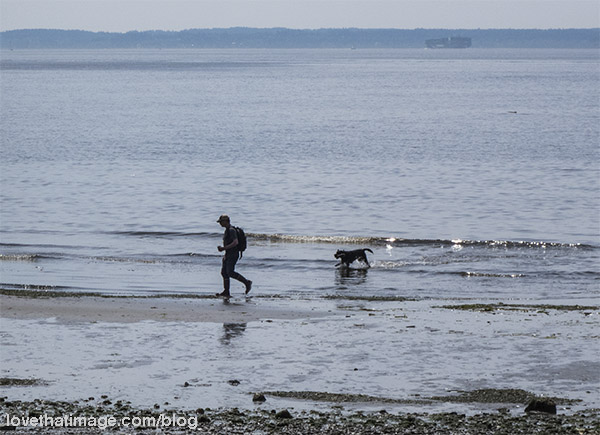 Man and dog play at the shore at Richmond Beach Park in Washington