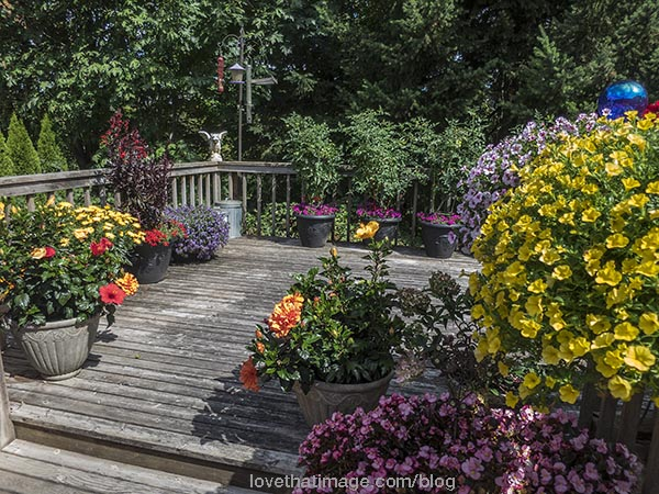 Many colorful flowers blooming on a wooden deck