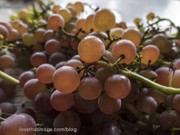 Delicious red seedless grapes from my backyard vine