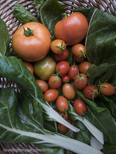 Garden vegetables in a basket