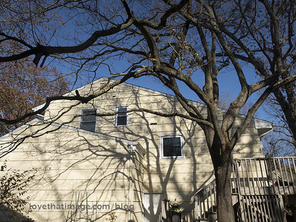 Bare branches make another tree on a white house in the late fall