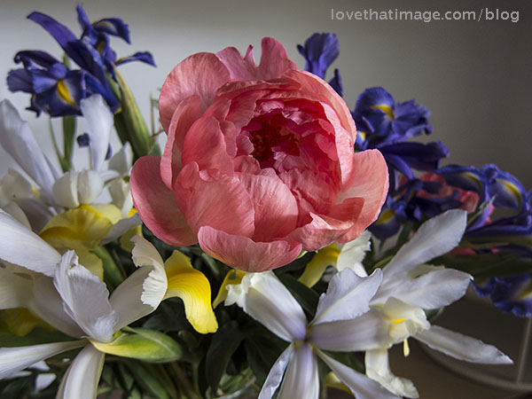 Purple, white and yellow Dutch irises and a coral peony flower in a spring bouquet