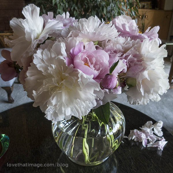 Pink and white peonies in a glass vase on a black table