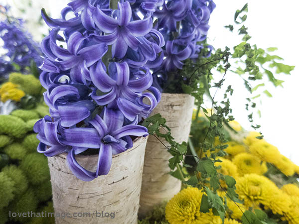 "Blue and purple hyacinths in unusual birch bark ""vases,"" nestled near yellow button chrysanthemums"