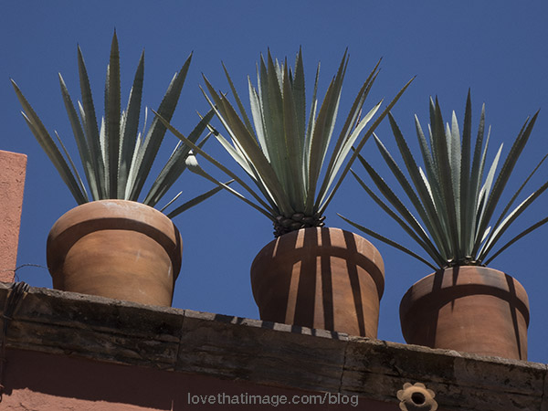Agave spiky leaves and shadows on a roof in San Miguel de Allende, Mexico