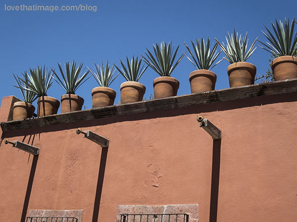 Agave plants in terra cotta pots on the roof's edge, in San Miguel