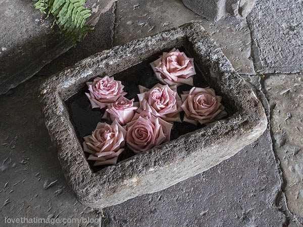 Full-blown pink roses float in a stone vessel in San Miguel, Mexico