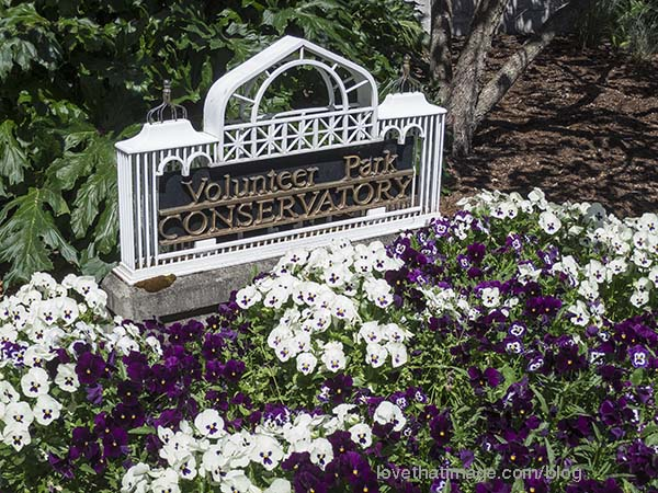 Purple and white pansies in front of the Conservatory's iconic sign.