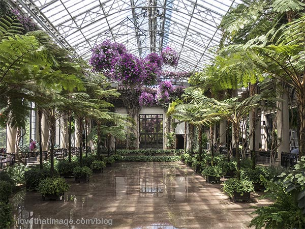 Hanging flower baskets, ferns and palms in this conservatory space at Longwood Gardens