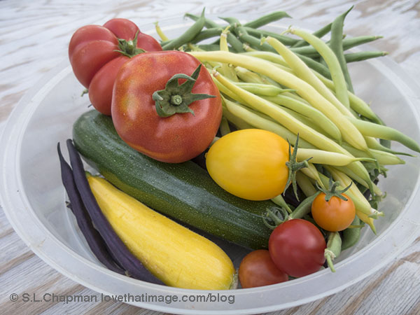 Tomatoes, zucchini and three colors of stringbeans from the backyard garden