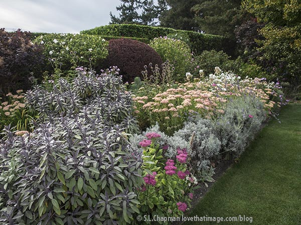 Purple sage and tall pink sedums in this brilliant flower border in late August