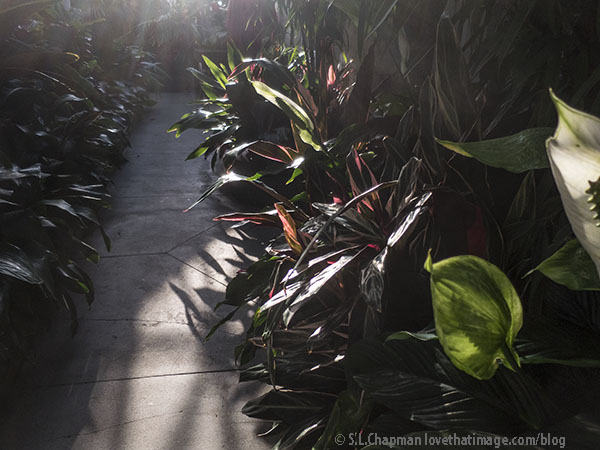 Peace lilies and dracenas in the Palm House in the Conservatory