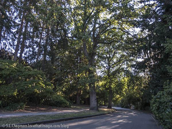 Park roadway in summertime