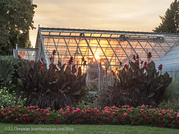 The Bromeliad House (west wing) of Seattle's Volunteer Park Conservatory on a fine August evening