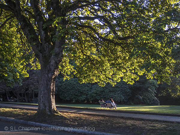 A chestnut tree shelters a relaxing couple in Volunteer Park on a lovely afternoon
