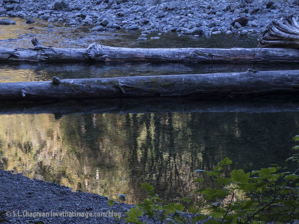 Logs and river stones and early fall tree reflections in the north fork of the Skokomish River