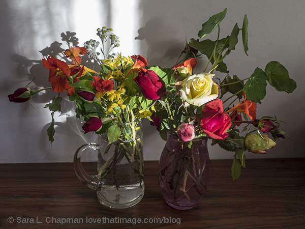Roses, orange nasturtiums, yellow winter jasmine, and a stem of dusty miller blooms on a sunny December day