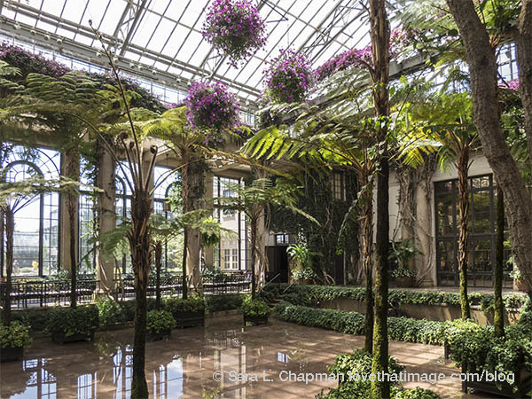 Flower balls hang over a ferny reflecting pool in a glass conservatory